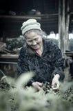 ЧИАНГМАЙ, ТАИЛАНД - 11-ОЕ ЯНВАРЯ: Старый неопознанный фермер p Стоковая Фотография