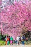ЧИАНГМАЙ, ТАИЛАНД 16-ое января: Туристы восхищая beaut Стоковая Фотография RF