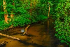 Чистая вода реки Tanew Стоковое фото RF