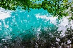 Чистая вода озер Plitvice, Хорватии Стоковые Фотографии RF