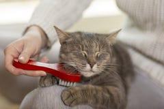 Чистить кота щеткой стоковое изображение