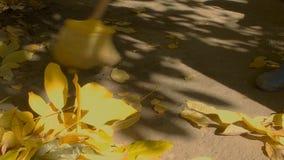 Чистка лист в саде сток-видео