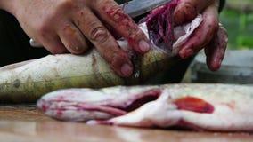 Чистка рыболова и резать свежих рыб акции видеоматериалы