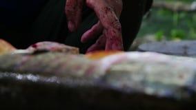 Чистка рыболова и резать свежих рыб сток-видео