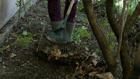 Чистка сада весны Садовник сгребая с листьями грабл в задворк видеоматериал
