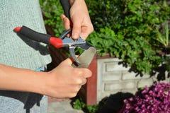 Чистка садовника и садовый инструмент точить в осени стоковое фото