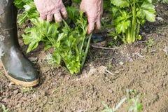 Чистка садовника в саде Стоковые Изображения