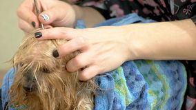 Чистка уха собаки акции видеоматериалы