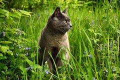 Чистоплеменный кот Стоковое фото RF