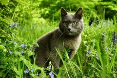 Чистоплеменный кот Стоковые Фото