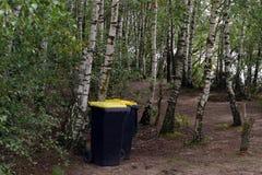 Чистота в лесе стоковое фото rf
