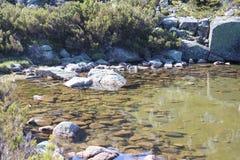 чисто вода Стоковое Фото