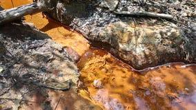 Чисто водопад свежей воды в лесе сток-видео