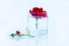 Чистый, чисто, чистая вода и красная роза Стоковое Изображение