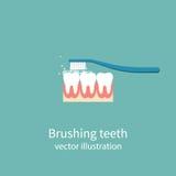 чистя щеткой зубы toothbrush бесплатная иллюстрация