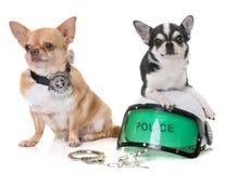 Чихуахуа полицейской собаки Стоковые Фото