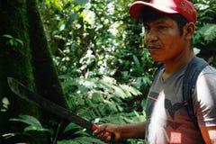 Член местного ticuna племенной ища журнал для того чтобы упасть в середине тропического леса стоковые фотографии rf
