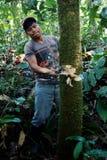 Член местного ticuna племенной прерывая журнал для того чтобы упасть в середине тропического леса стоковая фотография