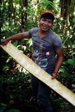 Член местного ticuna племенной с корой от дерева, который нужно использовать ее ткань как материал стоковое изображение rf