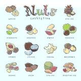 Чокнутая ореховая скорлупа вектора арахис и каштан анакардии иллюстрации питания миндалины и грецкого ореха фундука установленные бесплатная иллюстрация