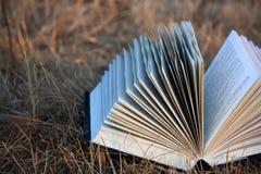 Чтение лета Стоковые Изображения RF