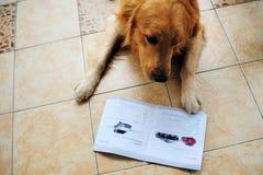 чтение кассеты собаки Стоковое Фото