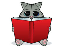 чтение кота книги Стоковые Фото
