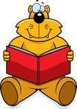 чтение кота Стоковое фото RF