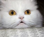 чтение кота Стоковые Фотографии RF