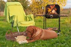 чтение пикника Стоковое фото RF