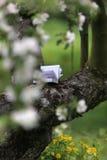 чтение сада Стоковое Фото