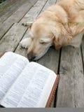 чтение собаки стоковое изображение
