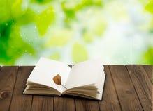 чтение стоковая фотография