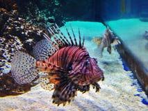 Что-то Fishy Стоковые Фотографии RF