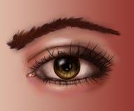 Чувства глаза тела Стоковое Изображение RF
