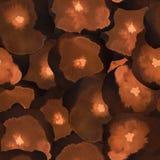 Чувствительная флористическая картина Стоковые Фото