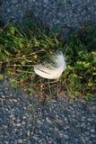 Чувствительное белое перо мягко приземляется на яркие ые-зелен заводы около скалистого асфальта как солнечный свет утра нежно осв стоковые изображения rf