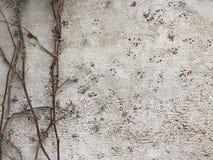 Чувствительные ветви растя на серой текстурированной стене стоковые изображения