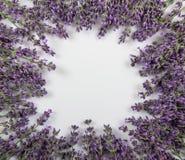 Чувствительные хворостины лаванды клали в изолированный круг, на белизну Стоковое Изображение RF