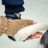 Чувствительный над съемкой пар вручает держать лапку сибирской лайки зима времени снежка цветка Стоковое Изображение