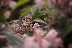 Чувствительная бабочка Стоковые Изображения