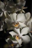 Чувствительная орхидея на солнце вечера Стоковые Изображения