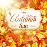 Чувствительное солнце осени 10 eps Стоковое Фото