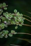 Чувствительные Бело-снабженные ободком листья Стоковые Изображения