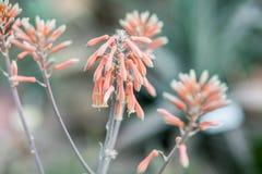 Чувствительные розовые цветки в парке Стоковое Фото