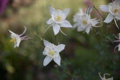 чувствительные цветки стоковые изображения rf