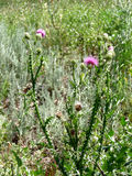чувствительные цветки Стоковые Изображения