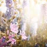 Чувствительный флористический hollyhock пинка предпосылки Стоковая Фотография RF