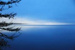 Чувствовать голуб Стоковые Изображения