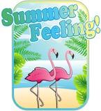 Чувство лета! - Фламинго на пляже Стоковые Изображения